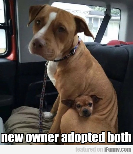 New Owner Adopted Both