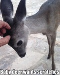 Baby Deer Wants Scratches