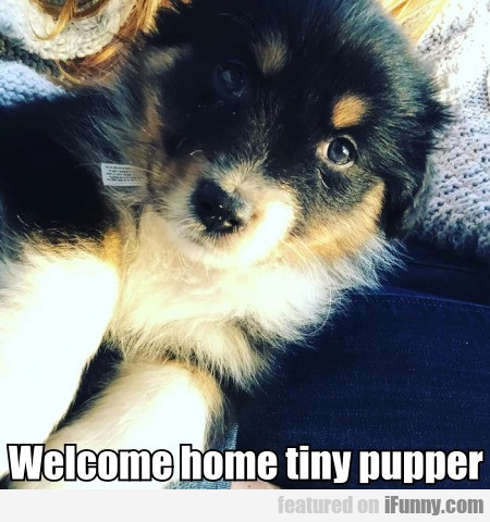 Welcome home tiny pupper