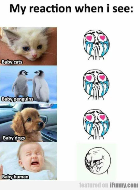 My Reaction When I See - Baby Cats - Baby Penguins