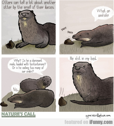 Otters Can Tell A Lot About Another Otter By The..