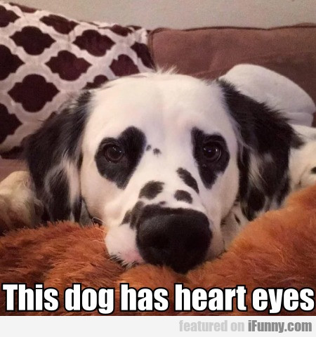 This Dog Has Heart Eyes