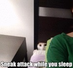 Sneak Attack While You Sleep