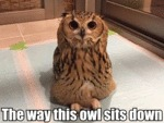 The Way This Owl Sits Down