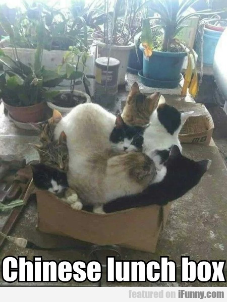 Chinese lunch box