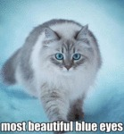 Most Beautiful Blue Eyes