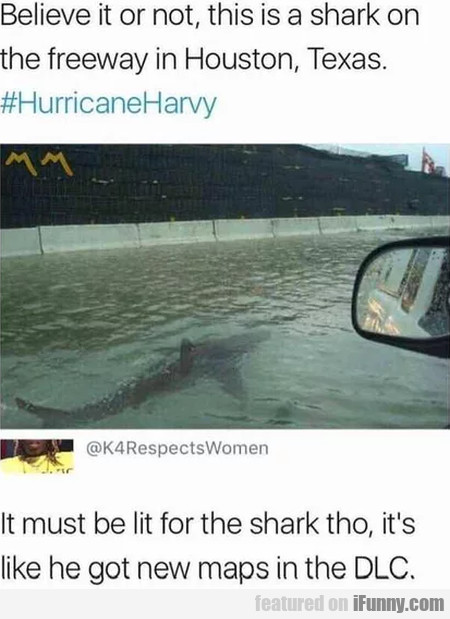 Believe It Or Not, This Is A Shark On The...