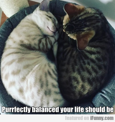 Purrfectly balanced your life should be