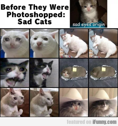 Before they were photoshopped sad cats