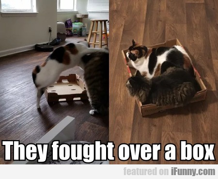 They Fought Over A Box