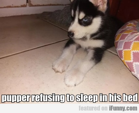 pupper refusing to sleep in his bed