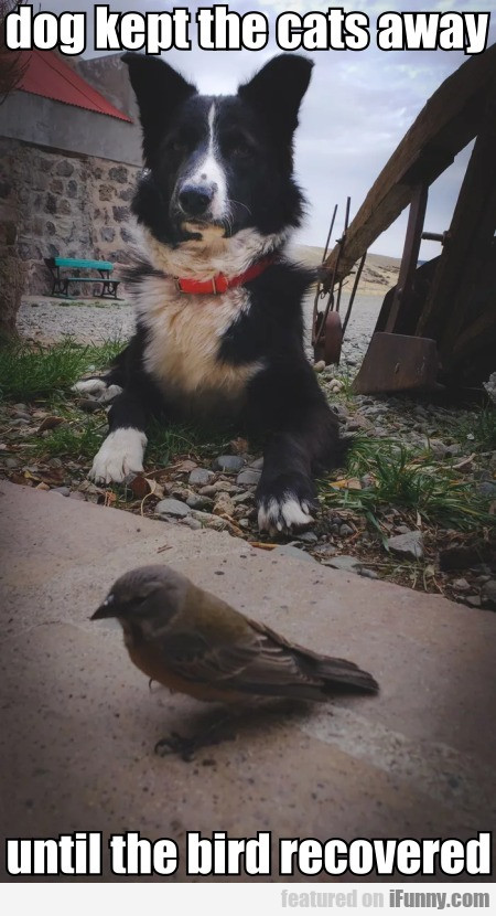 dog kept the cats away until the bird recovered