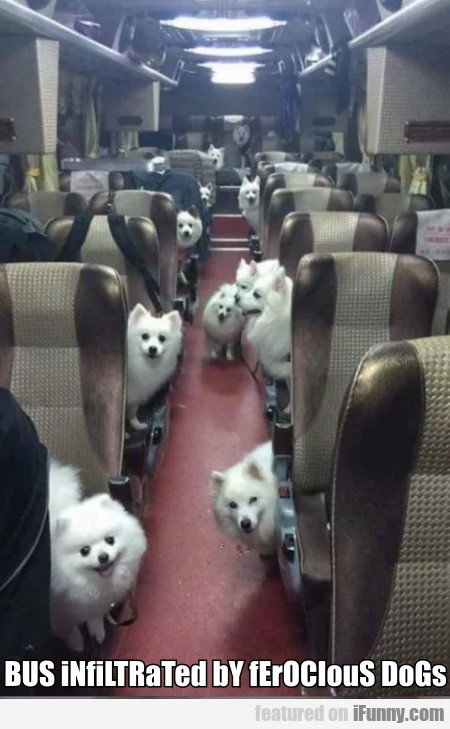 BUS iNfiLTRaTed bY fErOCIouS DoGs