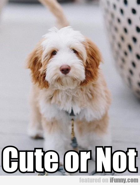 Cute or Not?