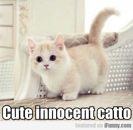 Cute Innocent Catto