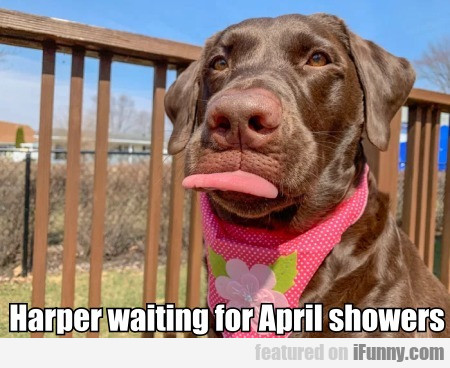 Harper Waiting For April Showers
