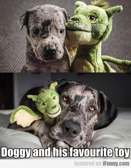 Doggy and his favourite toy
