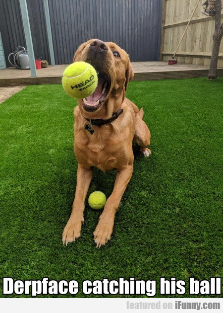Derpface Catching His Ball