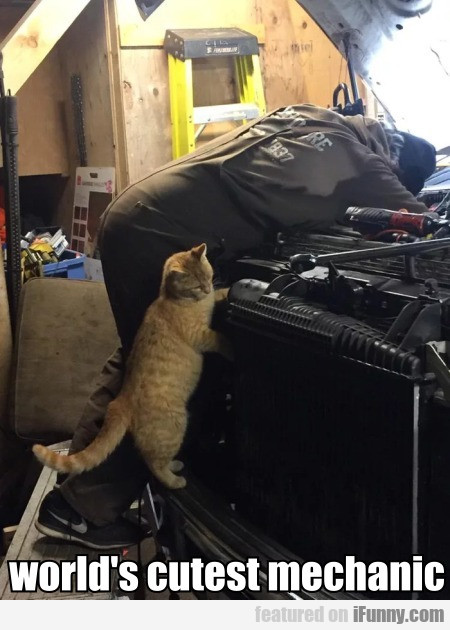 World's Cutest Mechanic
