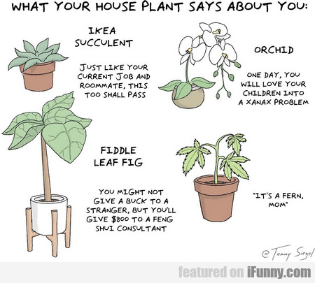 What Your House Plant Says About You