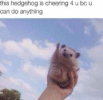 This Hedgehog Is Cheering 4 U Bc U Can Do...
