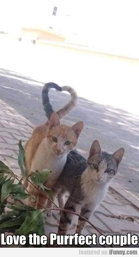 Love The Purrfect Couple