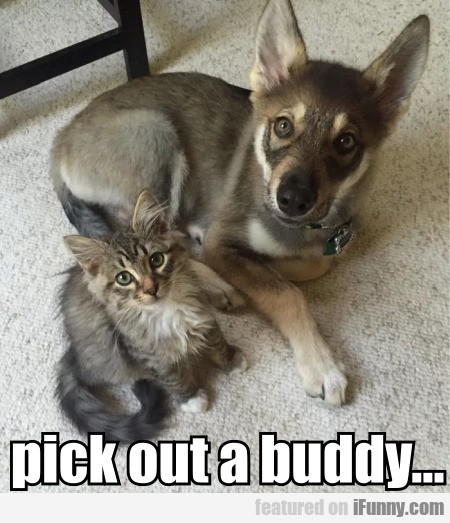Pick Out A Buddy