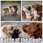 Battle Of The Floofs