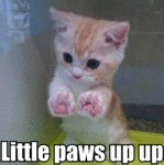Little Paws Up Up