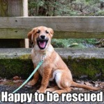 Happy To Be Rescued
