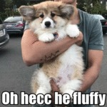 Oh Hecc He Fluffy