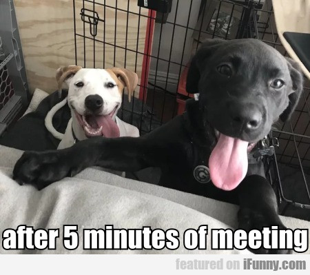 After 5 Minutes Of Meeting