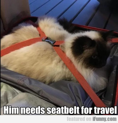 Him Needs Seatbelt For Travel