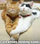 Cute Kitties Holding Hands