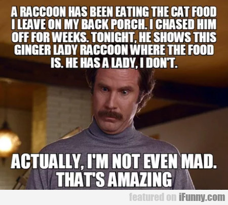 A Raccoon Has Been Eating The Cat Food