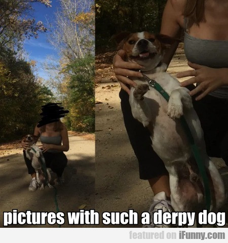 Pictures With Such A Derpy Dog