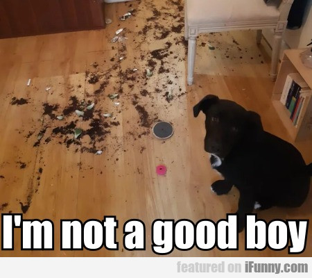 I'm Not A Good Boy