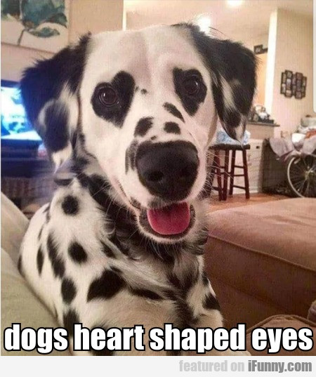 dogs heart shaped eyes