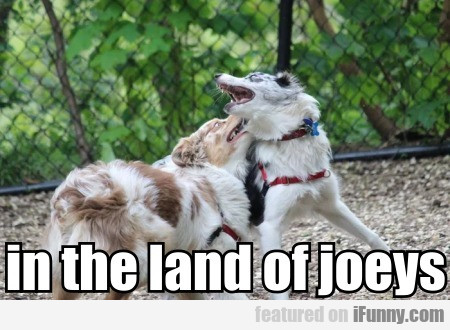 In The Land Of Joeys