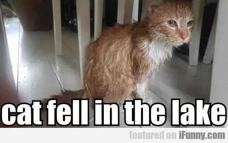 cat fell in the lake