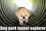 Dog Park Tunnel Explorer