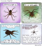 Wow! He Has Eight Legs! He Can Spin Webs!