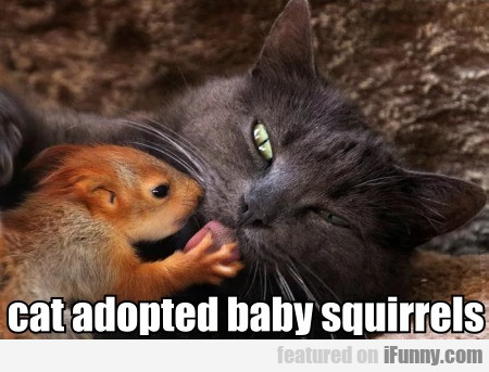 Cat Adopted Baby Squirrels