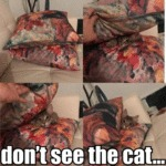 Don't See The Cat