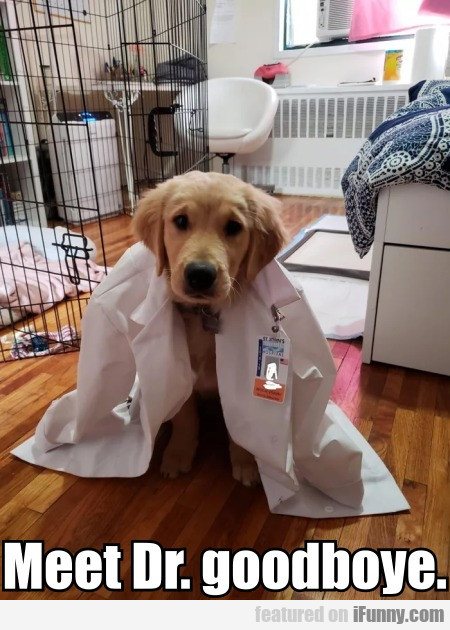 Meet Dr. goodboye
