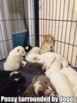 Pussy Surrounded By Dogos