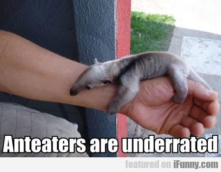 Anteaters are underrated