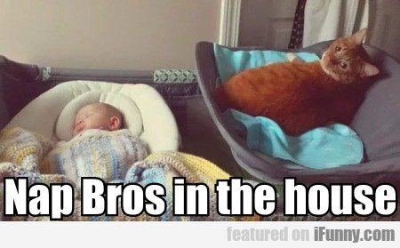 Nap Bros In The House