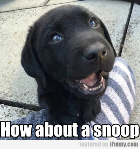 How About A Snoop