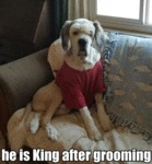 He Is King After Grooming